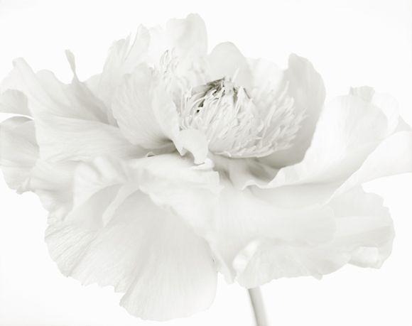 http://www.robertkleingallery.com/gallery/images/contemporary/izu__yumiko/secretgarden_blanc77.jpg