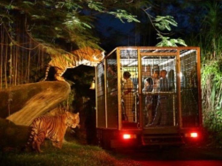Inclusions: Welcome Drink Walking Safari Night Safari Journey (1x) BBQ Dinner at Nkuchiro Restaurant Afr - - YukmariGO.com
