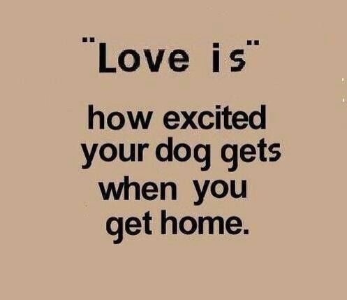 So unbelievably true! More people need to learn how to love in such a pure and unconditional way.
