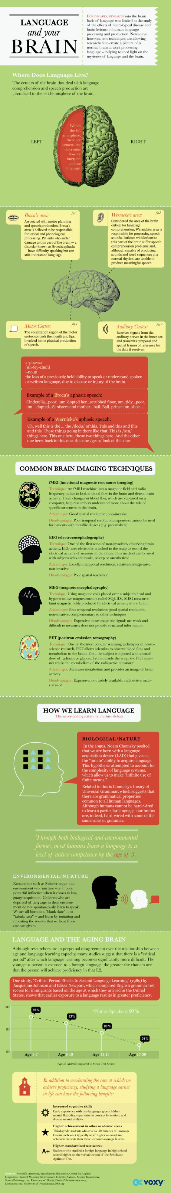 For centuries, researchers have studied the brain to find exactly where mechanisms for producing and interpreting language reside. Theories abound on howhumans acquire new languages and how our developing brains learn to process languages. We take a look at the mysteries of language and the brain in the infographic below. Note to teachers: Continue reading …