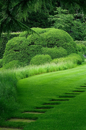 wild grass meadow lawn edging photo: Clive Nichols