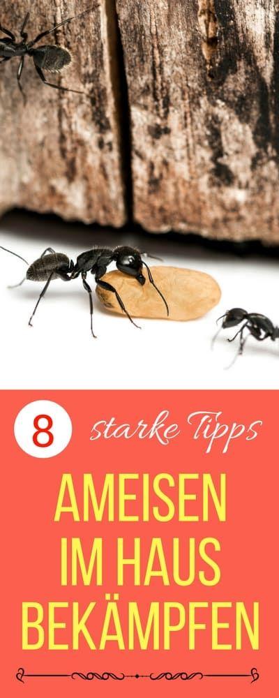 Die besten 25+ Was hilft gegen ameisen Ideen auf Pinterest - ameisen in der k che was tun