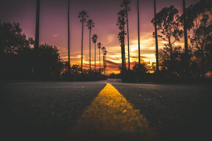 Download this free photo here www.picmelon.com #freestockphoto #freephoto #freebie /// Palm-lined Road   picmelon