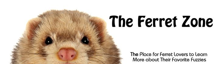 Ferret Clothes and Ferret Costumes for the Well Dressed Fuzzy | The Ferret Zone