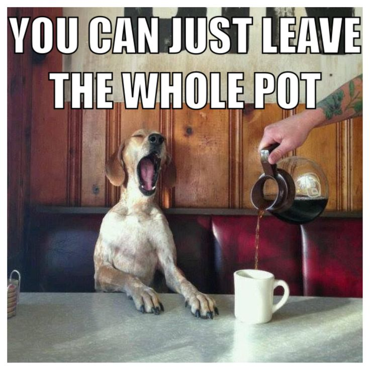 Happy Wednesday! mornings pets / Cute & Funny