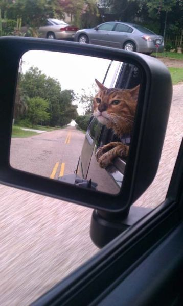 176 Best Cats N Cars Images On Pinterest Kitty Cats