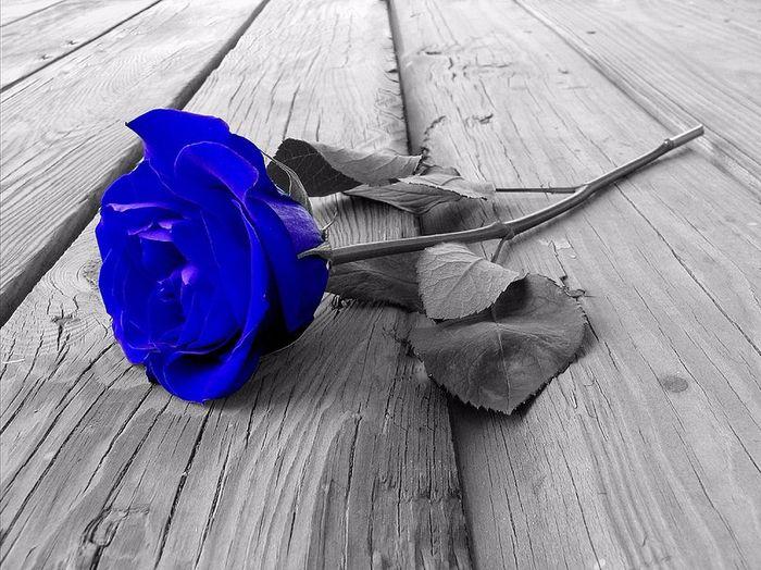 плачущая синяя роза черно белое фото теперь