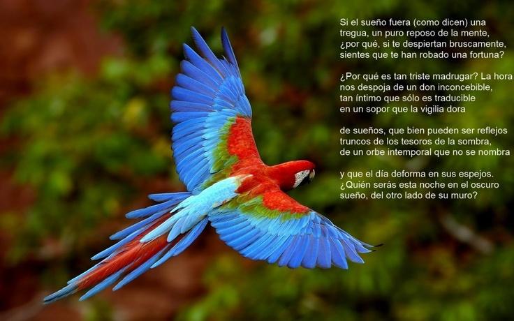 Borges: papagayo