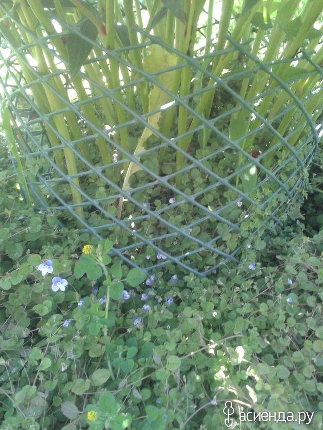 Легкая, красивая и надежная опора для цветущего травянистого пиона: Группа Клумбы и цветники