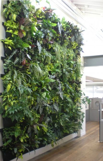 139 best vertical gardens living walls images on for Indoor gardening nyc