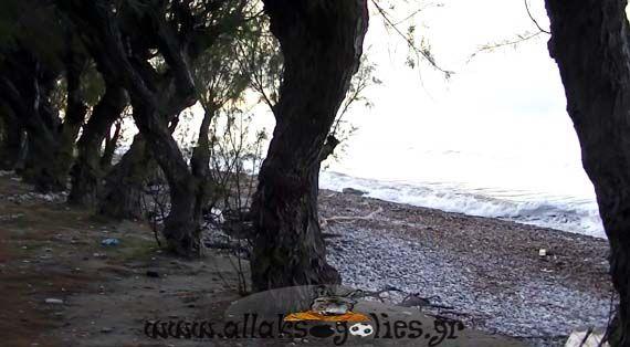 Βίντεο: Δείτε το μοναδικό αιωρούμενο δέντρο που υπάρχει στη Ρόδο