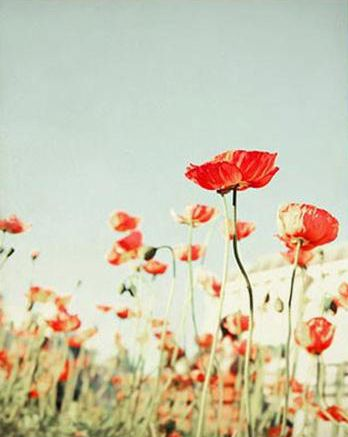 I love poppies!!!! They are my favorite. So beautiful and bold.