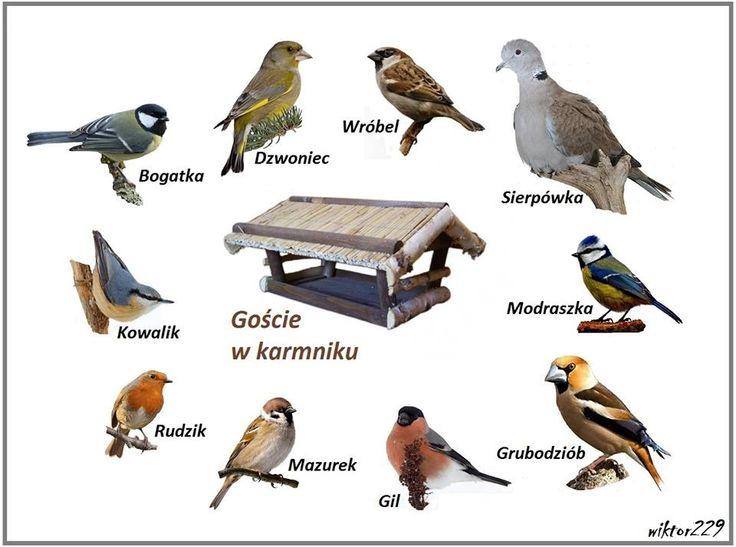 Ptaki zimą  - góście  w naszych ogrodach  [Grażyna Kabala....Poland  - Bieszczady ]
