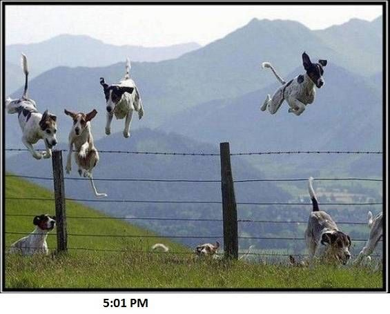 5:01 p.m.: Flying Dogs, Leap Years, The Hunt'S, Pet, Counted Sheep, Happy Dogs, Dogs Funny, Dogs Photo, Animal