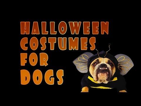 Halloween Costumes For Dogs For Sale With Halloween Costumes For Dogs | Dress up your dog | Pet Costumes | Dog Costumes | Halloween Costumes | #halloween_costumes_for_dogs #dogcostumes #petcostumes #halloweencostumes #costumesfordogs #funnycostumes #loveyourdog #bestfriend #halloweenparties #trickortreat #Holidaycostumes http://www.zombieinfestedworld.com/pet-halloween-costumes-for-dogs.html