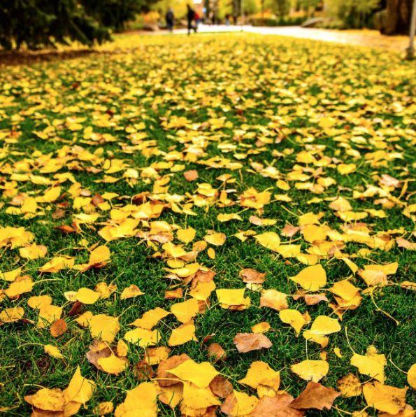 Happy First Day of Fall!  #uwyo #uwyoreslife #fall #autumn #Laramie #Wyoming #college #university