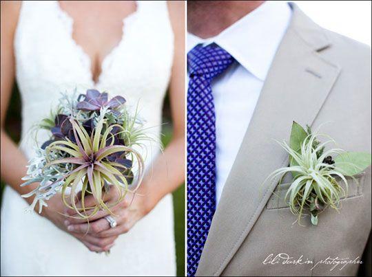 air plant bridal theme