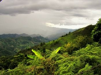 Eje Cafetero, Colombia. Come back to me.