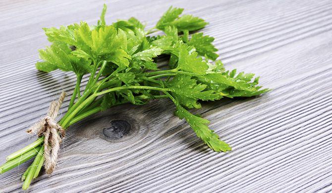 The Road Ahead Lifestyle (RACQ) Storage: Keep your herbs fresh