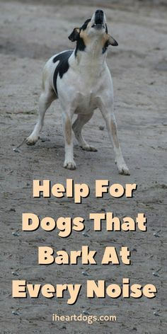 Got a barker on your hands? Find out how to help them out!