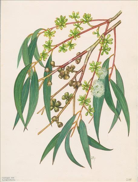 Fave Five by Becca Van (Feb. 13, 2014) 3. outdoor scent - eucalyptus trees