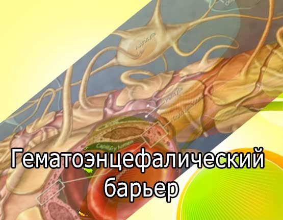 Гематоэнцефалический барьер головного мозга и гипоталамуса