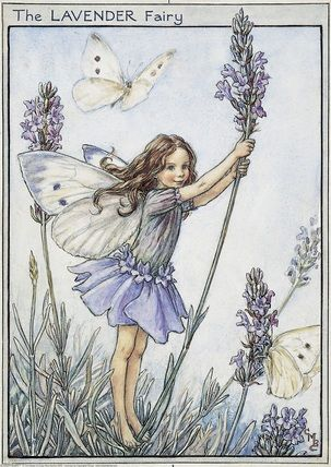 Illustration for the Lavender Fairy from Flower Fairies of the Garden. A girl fairy stands facing right holding on to a stem of lavender. A white butterfly flutters above her head and another butterfly rests on a lavender sprig.  										   																										Author / Illustrator  								Cicely Mary Barker