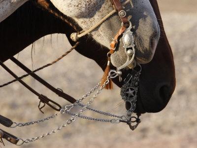 horse for Jen!: Hors Back Riding, Westerns Hors, Ears Birds, Bridle Off, Bridle Horses, California Style, Hunger Games, Nails Polish, Horses Bit
