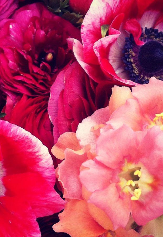 florals: Colour, Pink Flowers, Farmers Market, Colors, Beautiful Flowers, Flower Power, Bloom, Fresh Florals, Garden