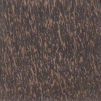 Black Palm (Borassus flabellifer)