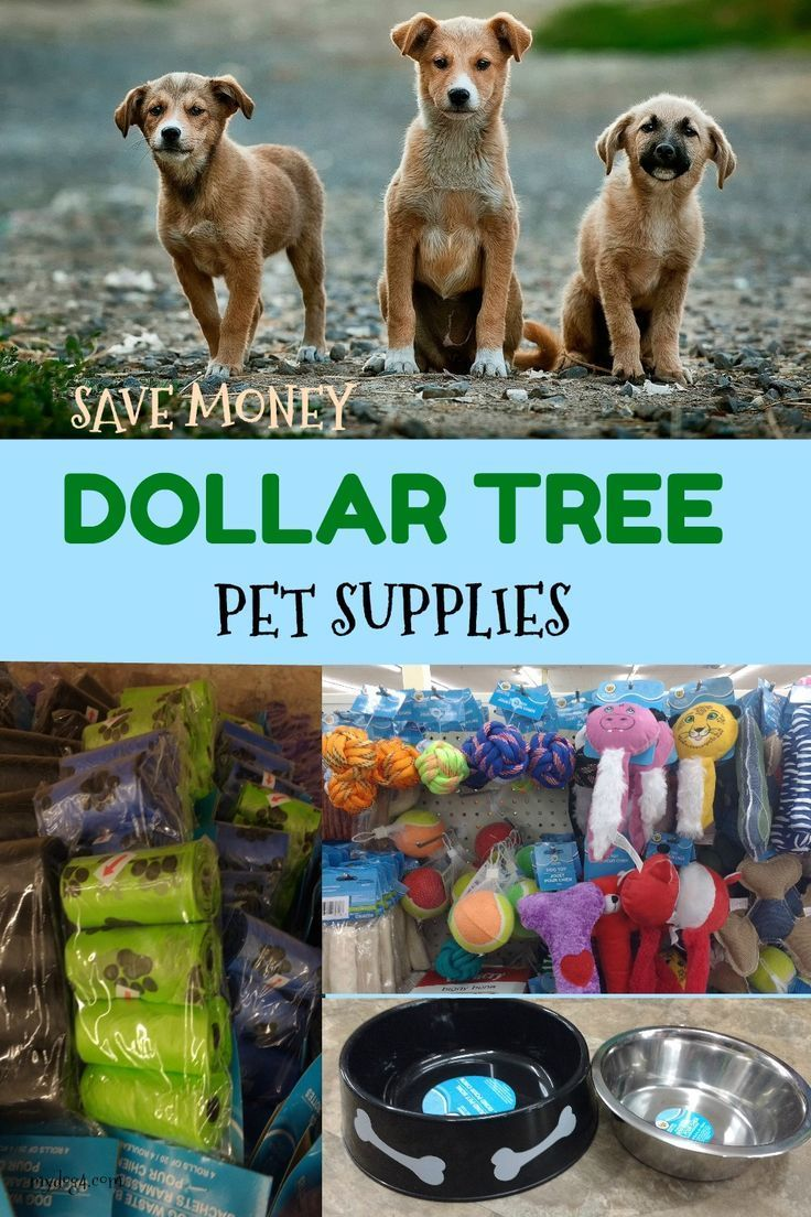 Dollar Tree Pet Supplies Pets Dog Toys Dog Supplies
