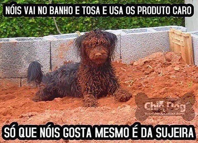 BEM ASSIM!  #cachorroétudodebom  #petmeupet  #cachorro  #amocachorro  #filhode4patas  #bulldog  #labrador  #pug  #schnauzer  #maltes  #luludapomerania  #goldenretriever  #filhote