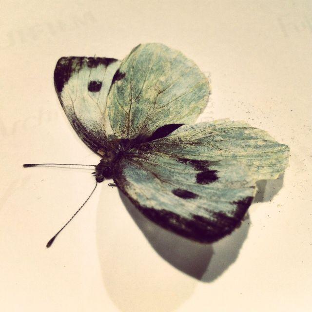 dead butterfly by Joanna Franks