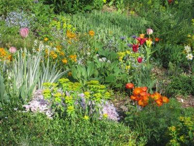 More steep garden ideas