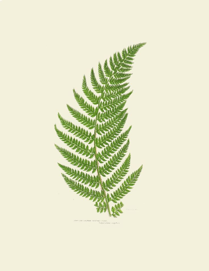 13 Best Images About Jeni S Botanicals On Pinterest