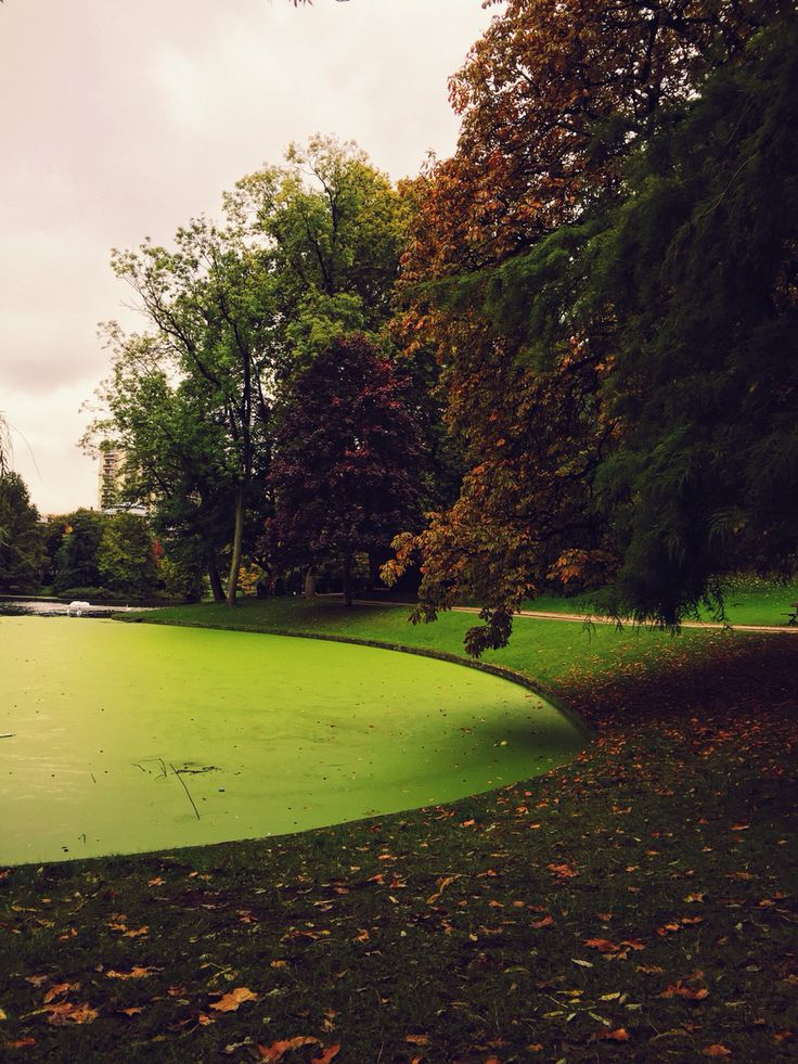 The park and its pea-soup lake.