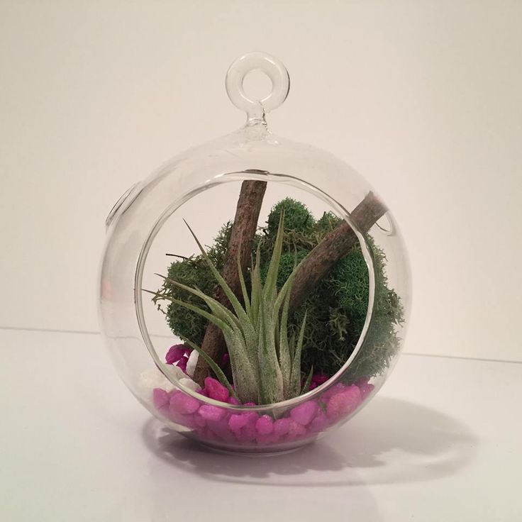 17 best images about air plant terrariums on pinterest different shapes coming soon and natural. Black Bedroom Furniture Sets. Home Design Ideas