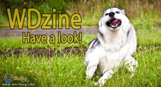 WDzine has been released! | WorlDog  A new technology for dog lovers! A new concept of dog magazine! Have a look at dogs from every place of the world!  http://worldog.com/wdzine/