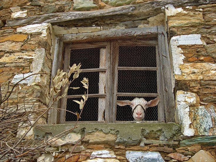 New inhabitants at Pouri village - Pelio - Greece by Alteroad Giorgio Emmanouilidis on 500px