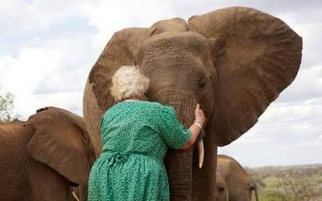 DOLLY HERO For more than half a century, Dame Daphne Sheldrick has rescued and looked after orphaned elephants in Kenya ❤ Dolly