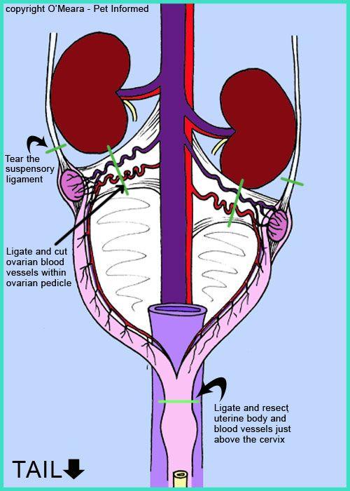 m12 to rj45 wiring diagram #3 E1 Wiring Diagram m12 to rj45 wiring diagram