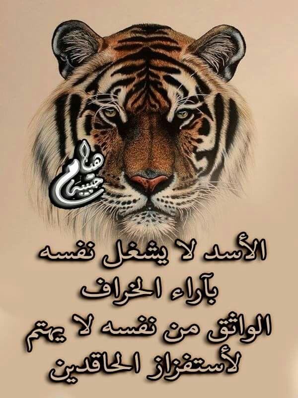 الواثق من نفسه لايهمه اراء الحاقدين Arabic Love Quotes Words Quotes Love Quotes