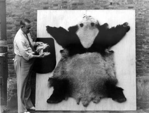 Mark Moody with panda pelt and skull. http://digitallibrary.usc.edu/cdm/ref/collection/p15799coll46/id/1409