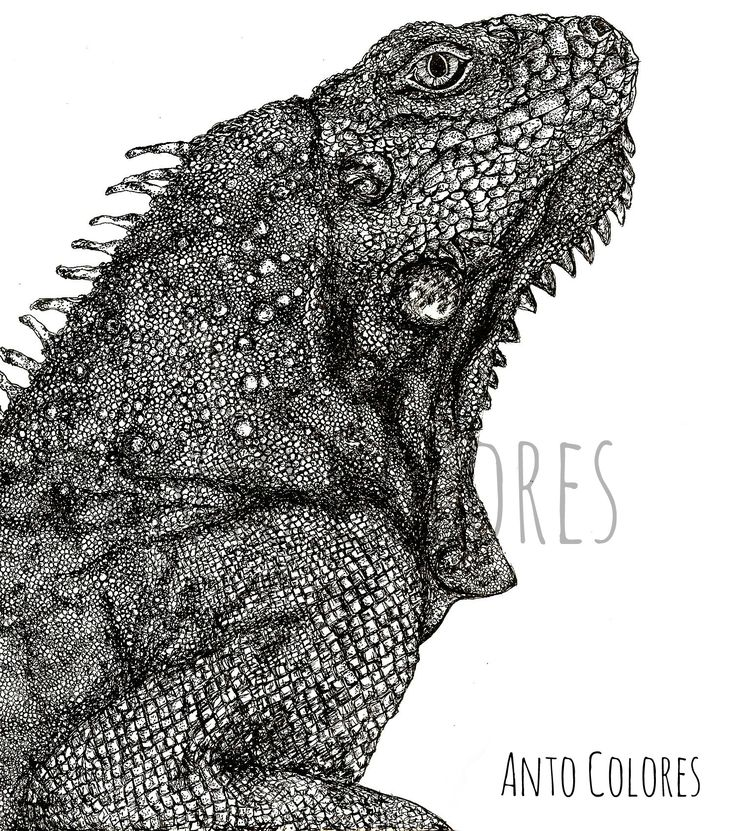 #iguana #illustration #ilustracion #antocolores  www.instagram.com/anto.colores https://www.facebook.com/AntoColores/?ref=aymt_homepage_panel