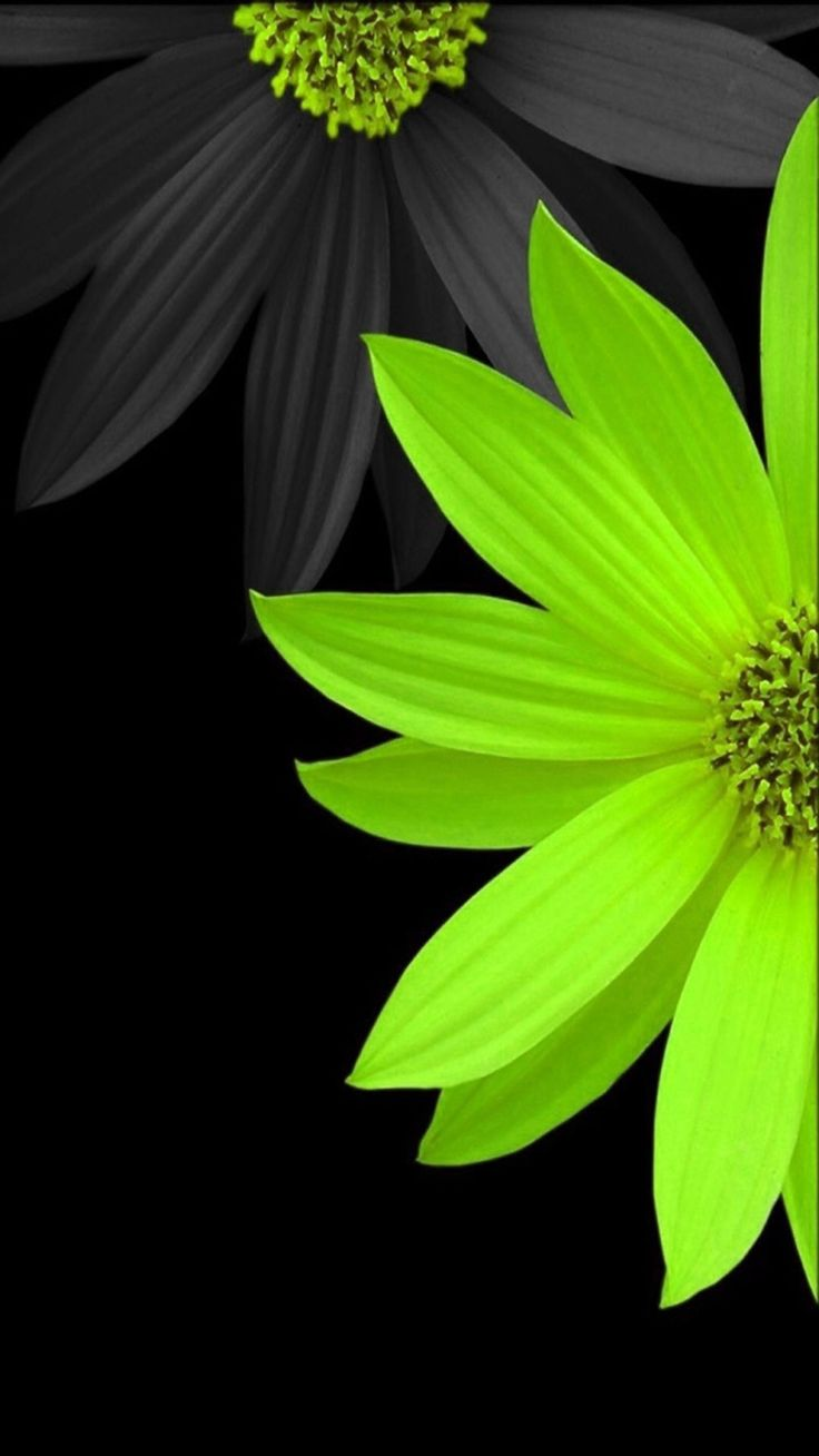 Bright Flower Iphone Wallpapers Pinterest Bright Flowers And Wallpaper