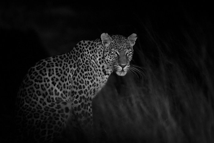 Hwange Walking Safari #Zimbabwe
