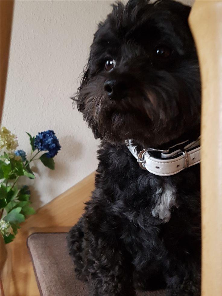 Hunde Foto: Susi und Teddy - Soooo süß ❤ Hier Dein Bild hochladen: http://ichliebehunde.com/hund-des-tages  #hund #hunde #hundebild #hundebilder #dog #dogs #dogfun  #dogpic #dogpictures