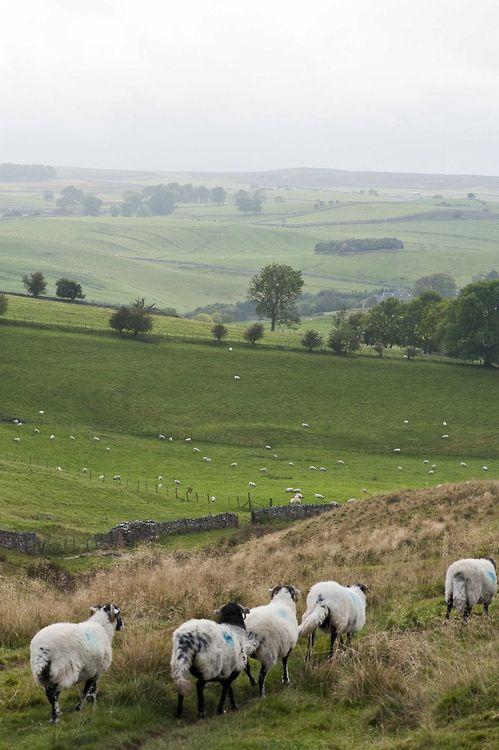 wanderthewood:  Yorkshire Dales, England byRosarian49