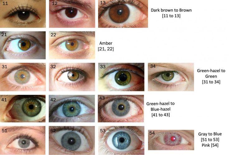 The Human Eye Color Chart