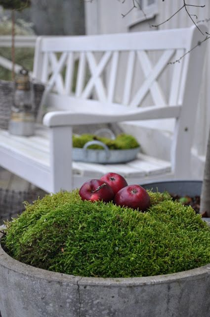 Vita Verandan .... winter moss potted plant garden, cute to decorate and leave out apples by the door for guests
